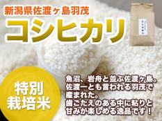 nitta_sadogashima